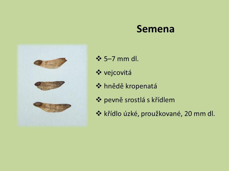 Semena  5–7 mm dl.  vejcovitá  hnědě kropenatá  pevně srostlá s křídlem  křídlo úzké, proužkované, 20 mm dl.