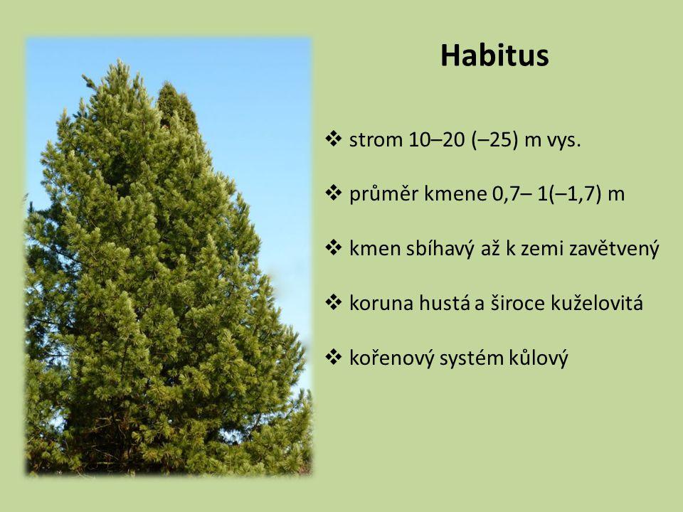 Habitus  strom 10–20 (–25) m vys.  průměr kmene 0,7– 1(–1,7) m  kmen sbíhavý až k zemi zavětvený  koruna hustá a široce kuželovitá  kořenový syst