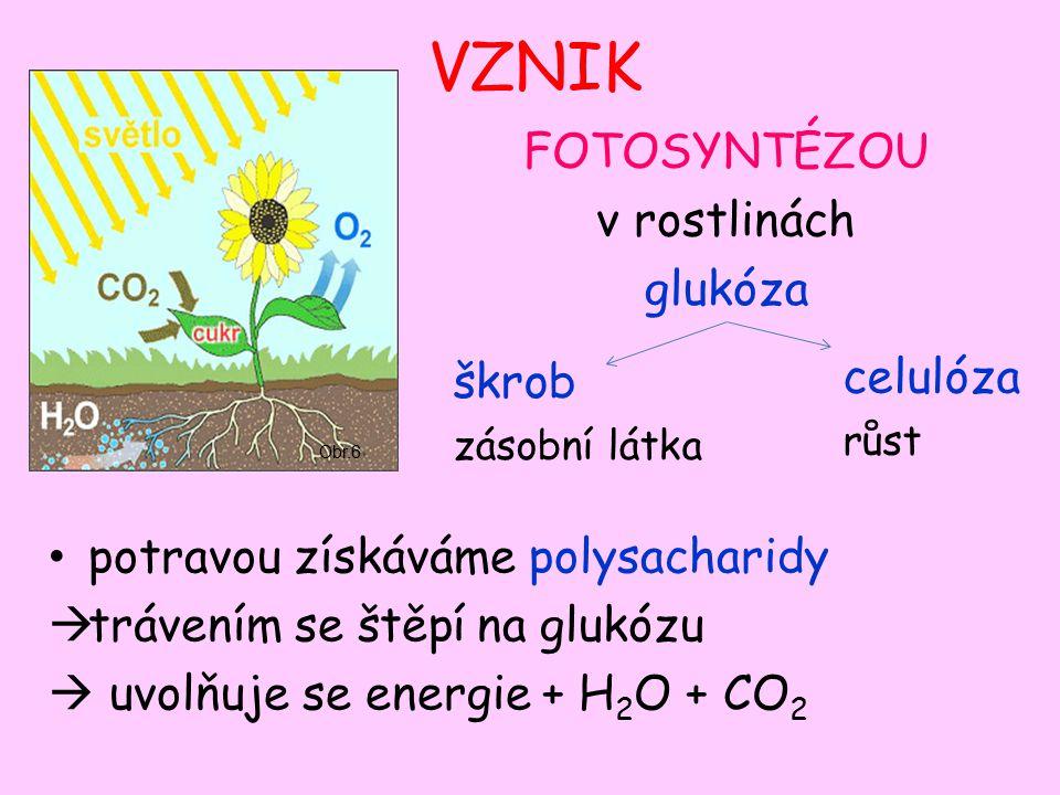 VZNIK potravou získáváme polysacharidy  trávením se štěpí na glukózu  uvolňuje se energie + H 2 O + CO 2 Obr.6 FOTOSYNTÉZOU v rostlinách glukóza škrob zásobní látka celulóza růst