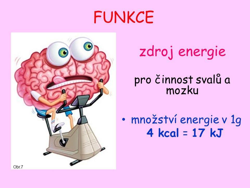 FUNKCE zdroj energie pro činnost svalů a mozku množství energie v 1g 4 kcal = 17 kJ Obr.7
