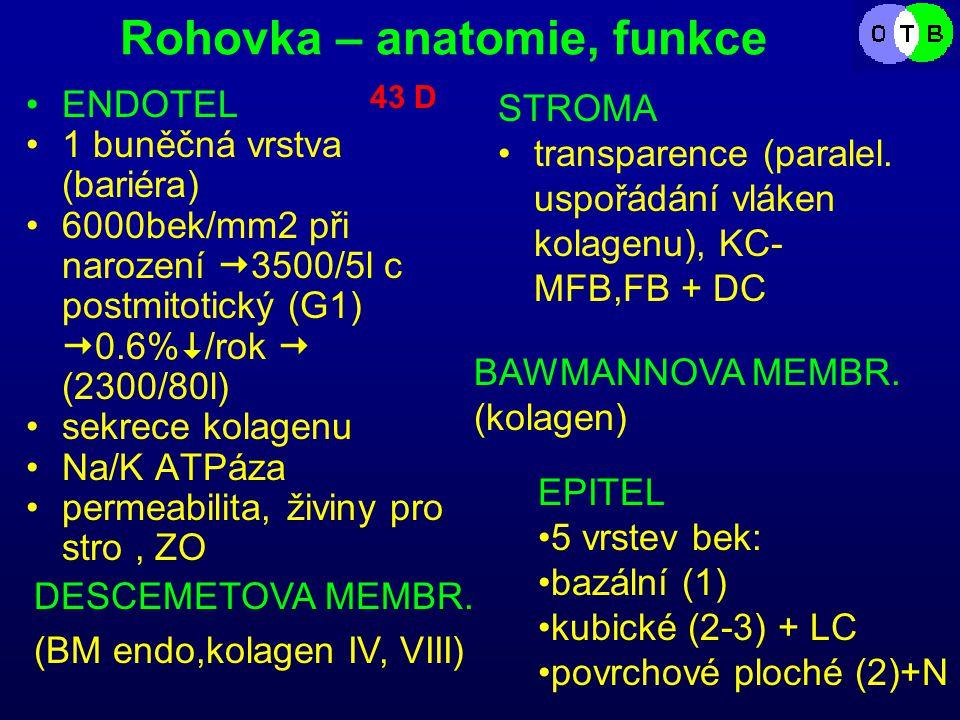 Rohovka – anatomie, funkce ENDOTEL 1 buněčná vrstva (bariéra) 6000bek/mm2 při narození  3500/5l c postmitotický (G1)  0.6%  /rok  (2300/80l) sekrece kolagenu Na/K ATPáza permeabilita, živiny pro stro, ZO STROMA transparence (paralel.