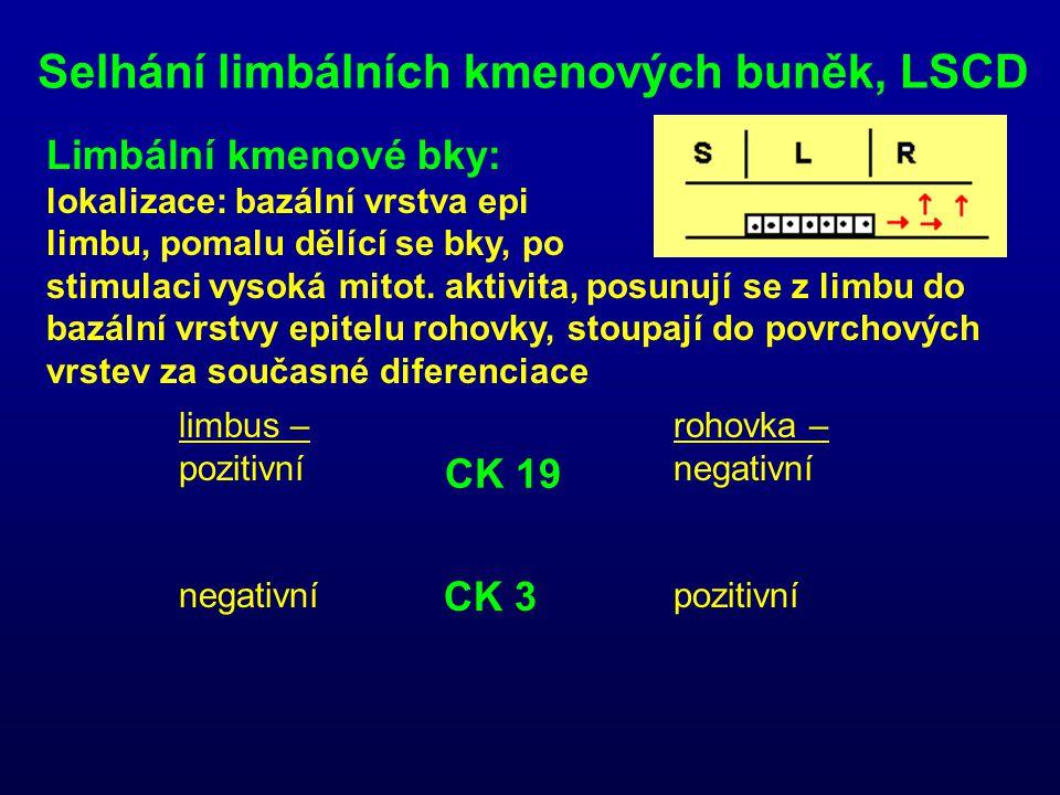 Selhání limbálních kmenových buněk, LSCD Limbální kmenové bky: lokalizace: bazální vrstva epi limbu, pomalu dělící se bky, po stimulaci vysoká mitot.
