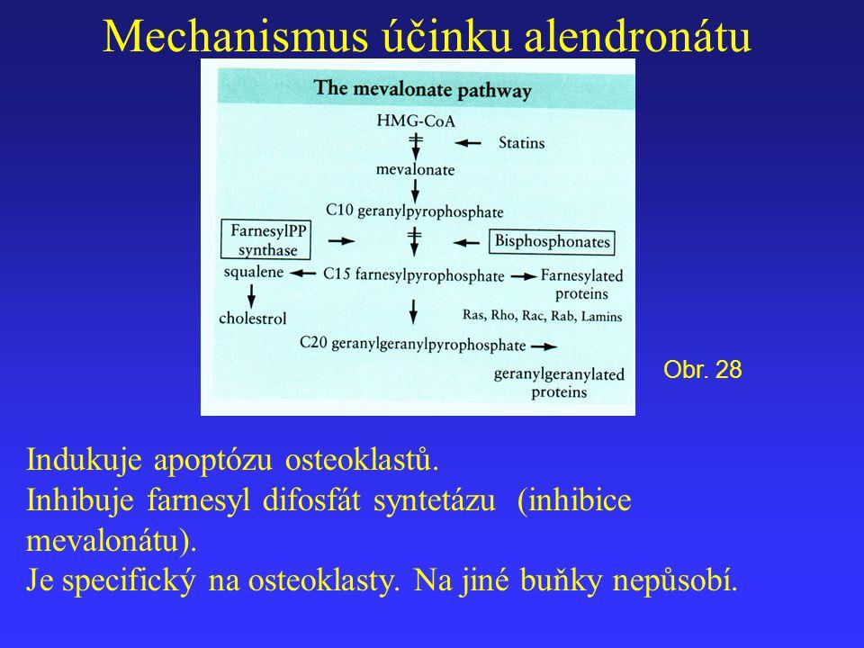 Mechanismus účinku alendronátu Indukuje apoptózu osteoklastů. Inhibuje farnesyl difosfát syntetázu (inhibice mevalonátu). Je specifický na osteoklasty