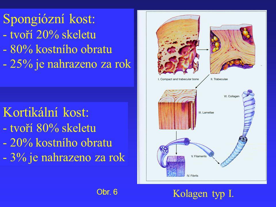 Spongiózní kost: - tvoří 20% skeletu - 80% kostního obratu - 25% je nahrazeno za rok Kortikální kost: - tvoří 80% skeletu - 20% kostního obratu - 3% j
