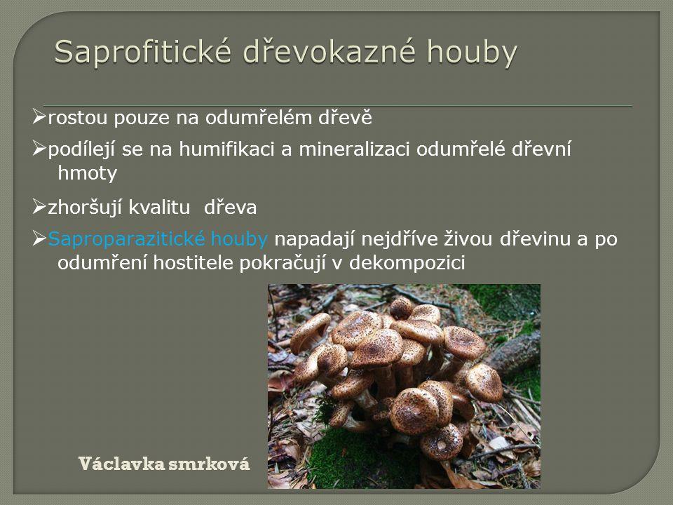  rostou pouze na odumřelém dřevě  zhoršují kvalitu dřeva  podílejí se na humifikaci a mineralizaci odumřelé dřevní hmoty  Saproparazitické houby n