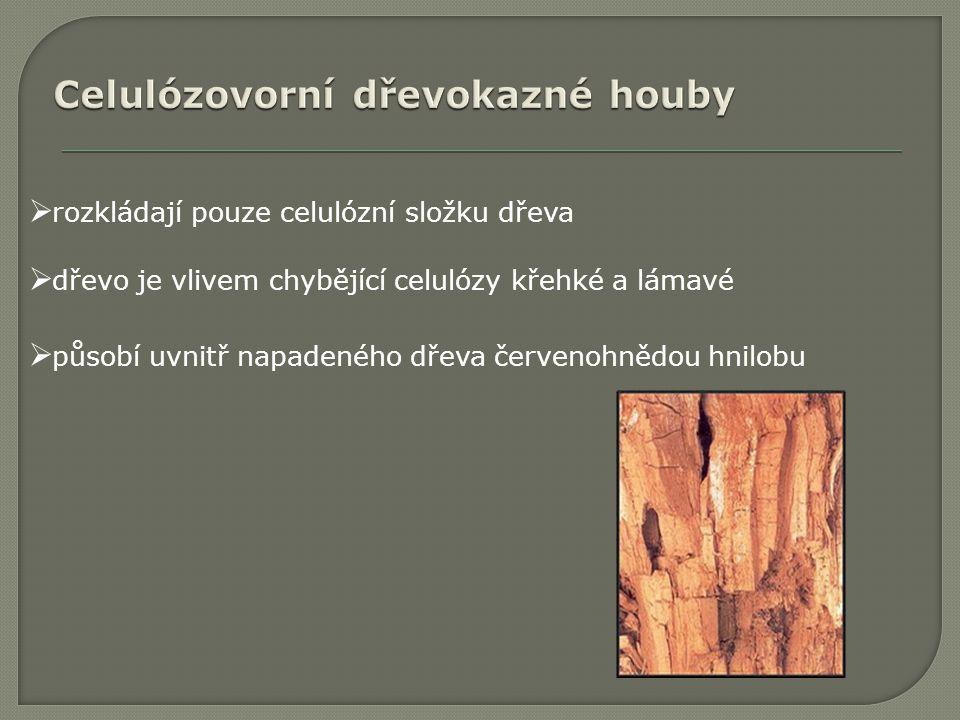  rozkládají pouze celulózní složku dřeva  dřevo je vlivem chybějící celulózy křehké a lámavé  působí uvnitř napadeného dřeva červenohnědou hnilobu