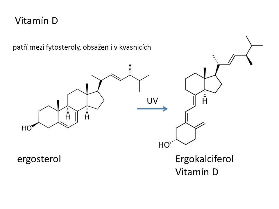 Vitamín D ergosterol UV Ergokalciferol Vitamín D patří mezi fytosteroly, obsažen i v kvasnicích