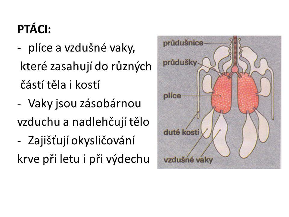 PTÁCI: -plíce a vzdušné vaky, které zasahují do různých částí těla i kostí -Vaky jsou zásobárnou vzduchu a nadlehčují tělo -Zajišťují okysličování krv