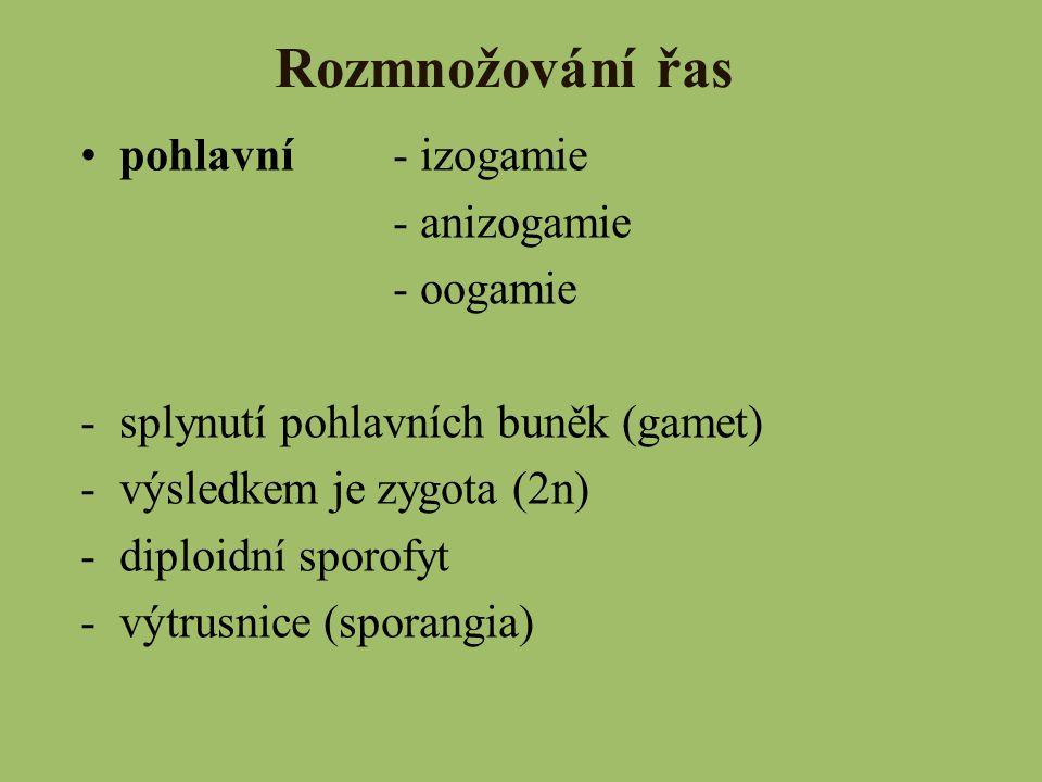 Rozmnožování řas pohlavní- izogamie - anizogamie - oogamie -splynutí pohlavních buněk (gamet) -výsledkem je zygota (2n) -diploidní sporofyt -výtrusnic