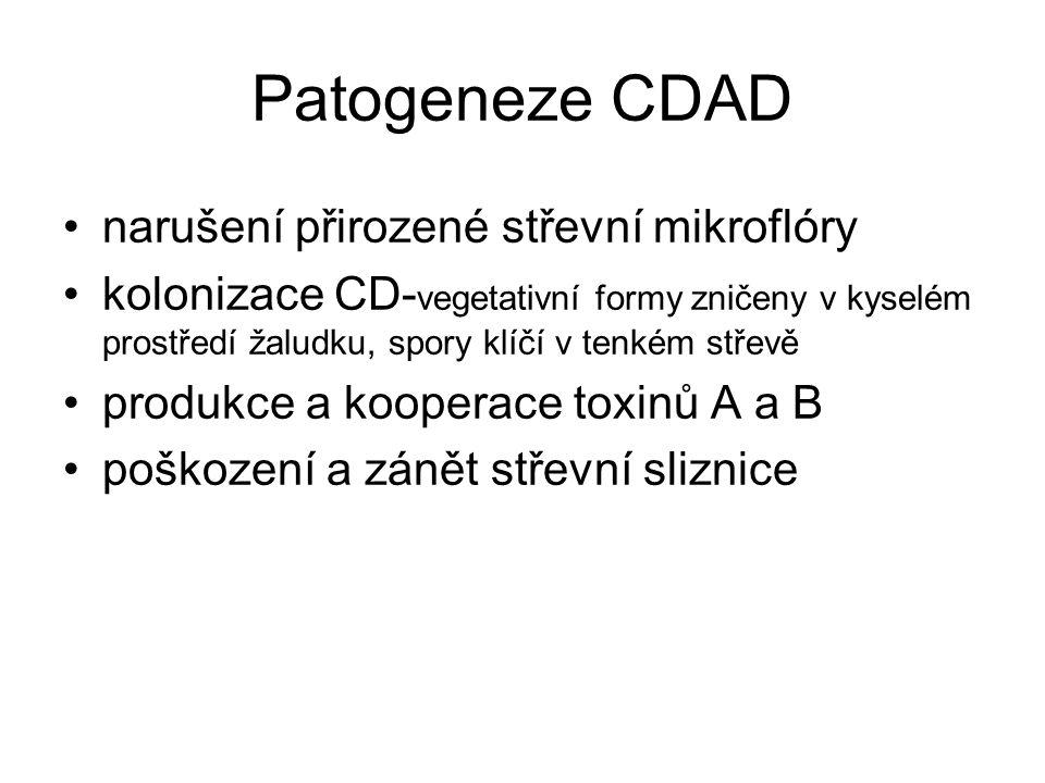 Patogeneze CDAD narušení přirozené střevní mikroflóry kolonizace CD- vegetativní formy zničeny v kyselém prostředí žaludku, spory klíčí v tenkém střev