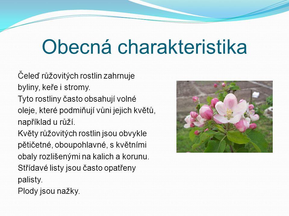 Obecná charakteristika Čeleď růžovitých rostlin zahrnuje byliny, keře i stromy. Tyto rostliny často obsahují volné oleje, které podmiňují vůni jejich