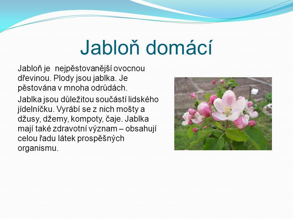 Zástupci Okrasné dřeviny: růže kdouloň obecná bobkovišeň lékařská