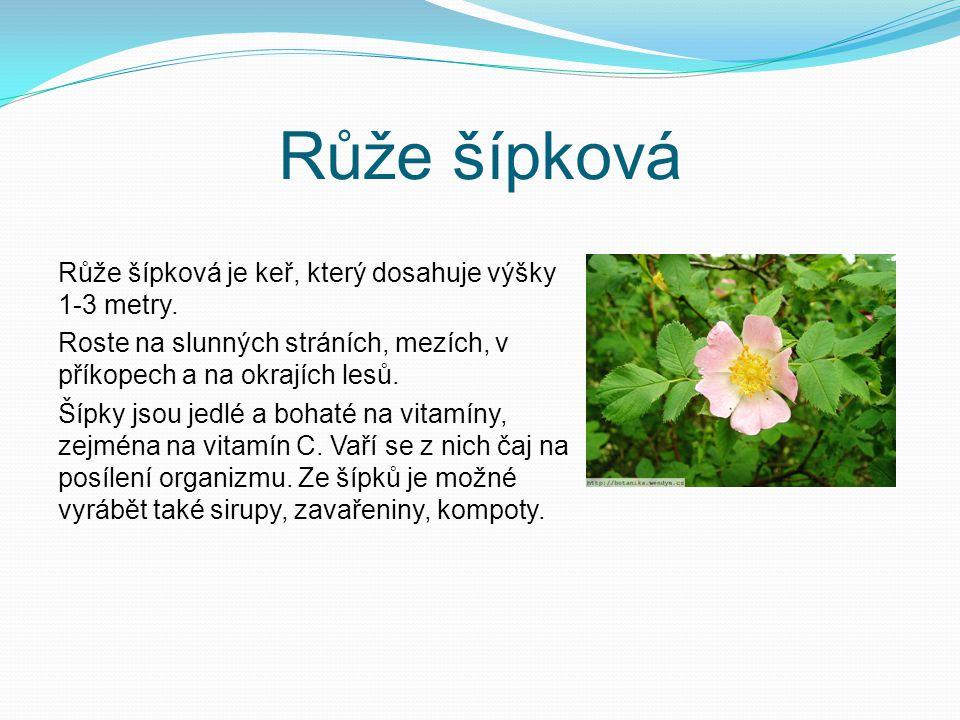 Růže šípková Růže šípková je keř, který dosahuje výšky 1-3 metry. Roste na slunných stráních, mezích, v příkopech a na okrajích lesů. Šípky jsou jedlé