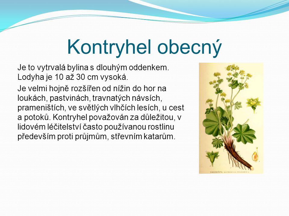 Kontryhel obecný Je to vytrvalá bylina s dlouhým oddenkem. Lodyha je 10 až 30 cm vysoká. Je velmi hojně rozšířen od nížin do hor na loukách, pastvinác