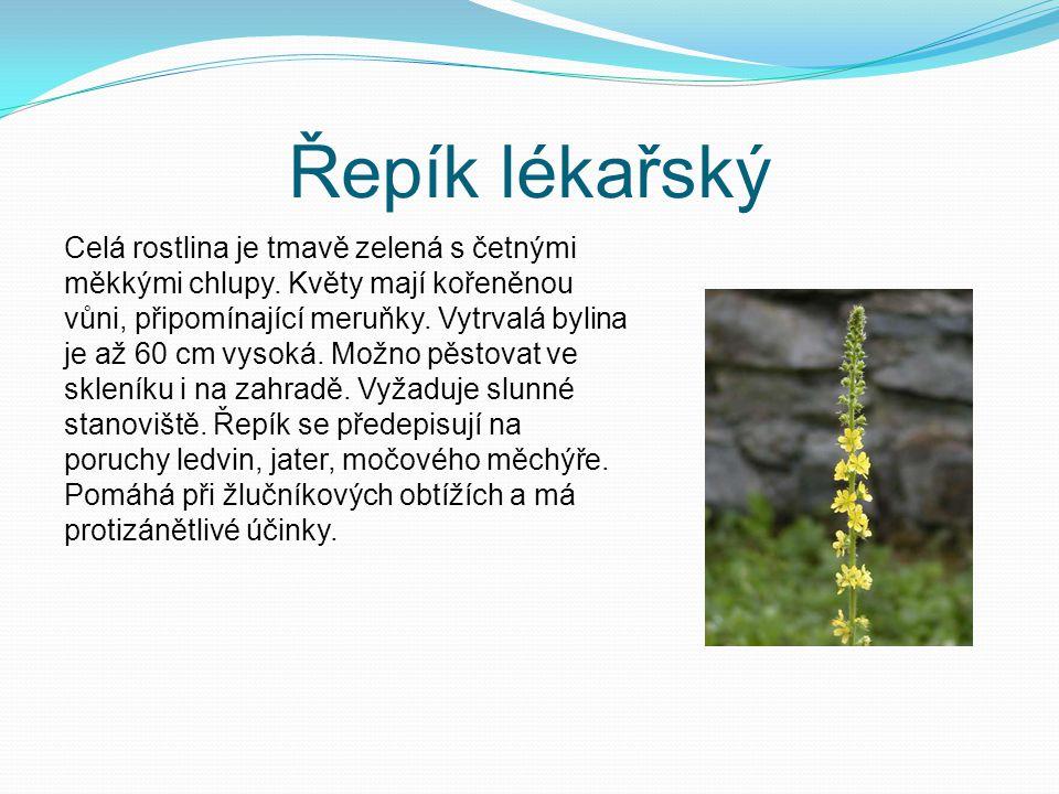 Zápis do sešitu zahrnuje byliny, keře i stromy mají střídavé listy opatřeny palisty květy jsou pětičetné, oboupohlavné, rozlišeny na kalich a korunu plody jsou nažka, malvice a peckovice