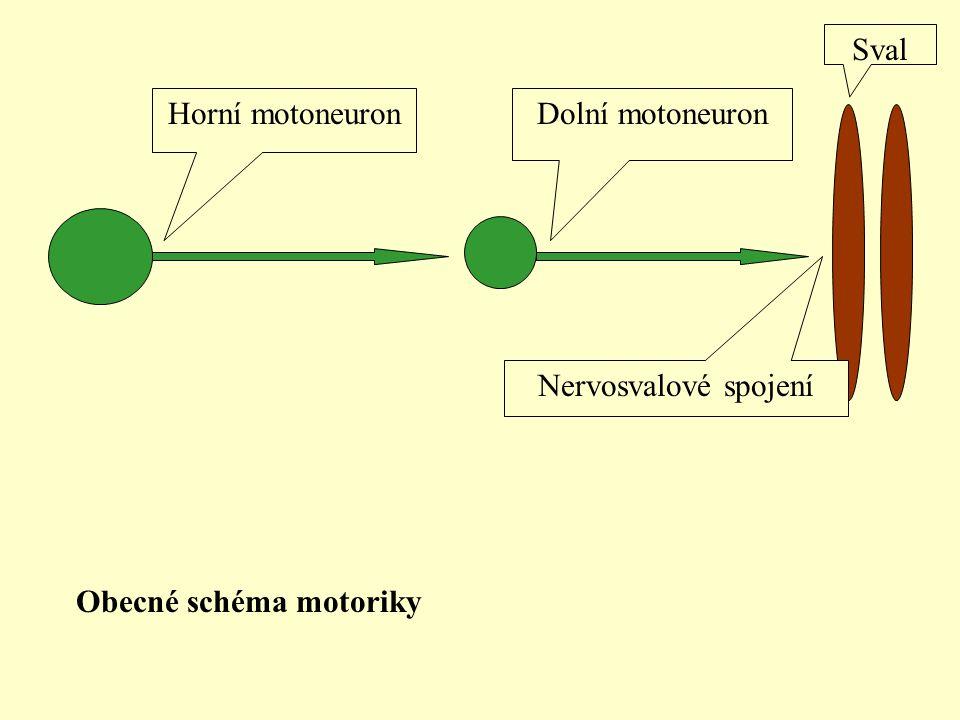 Horní motoneuronDolní motoneuron Sval Nervosvalové spojení Obecné schéma motoriky