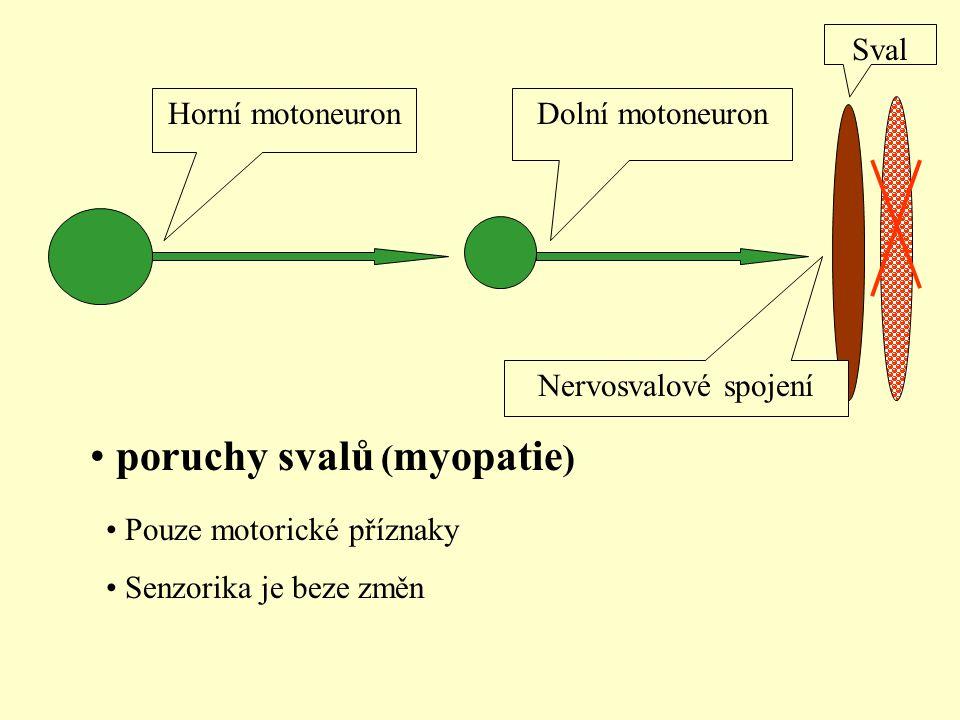 Horní motoneuronDolní motoneuron Sval Nervosvalové spojení poruchy svalů ( myopatie ) Pouze motorické příznaky Senzorika je beze změn