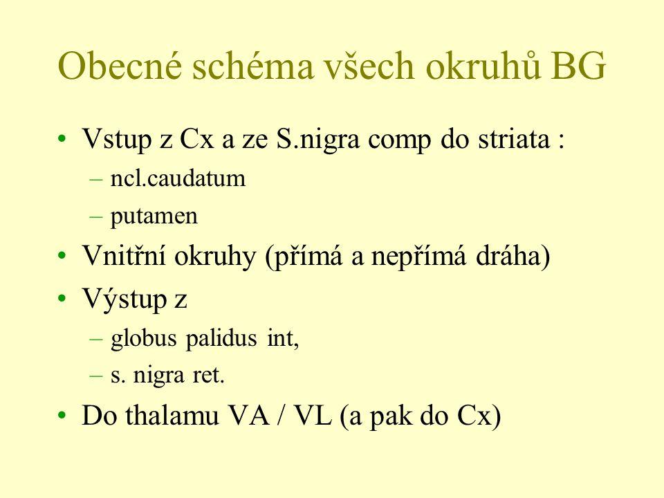 Obecné schéma všech okruhů BG Vstup z Cx a ze S.nigra comp do striata : –ncl.caudatum –putamen Vnitřní okruhy (přímá a nepřímá dráha) Výstup z –globus