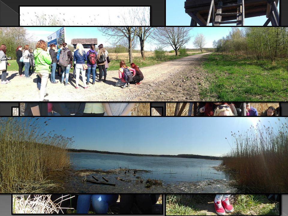  Výlet k Bohdanečskému rybníku, kde jsme pozorovali hnízdiště ohrožených druhů ptactva a inhalovali čerstvý vzduch, daleko od víru velkoměsta.