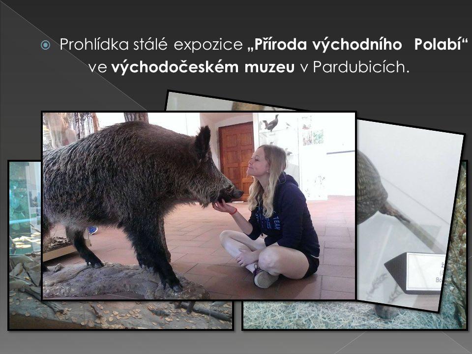 """ Prohlídka stálé expozice """"Příroda východního Polabí ve východočeském muzeu v Pardubicích."""
