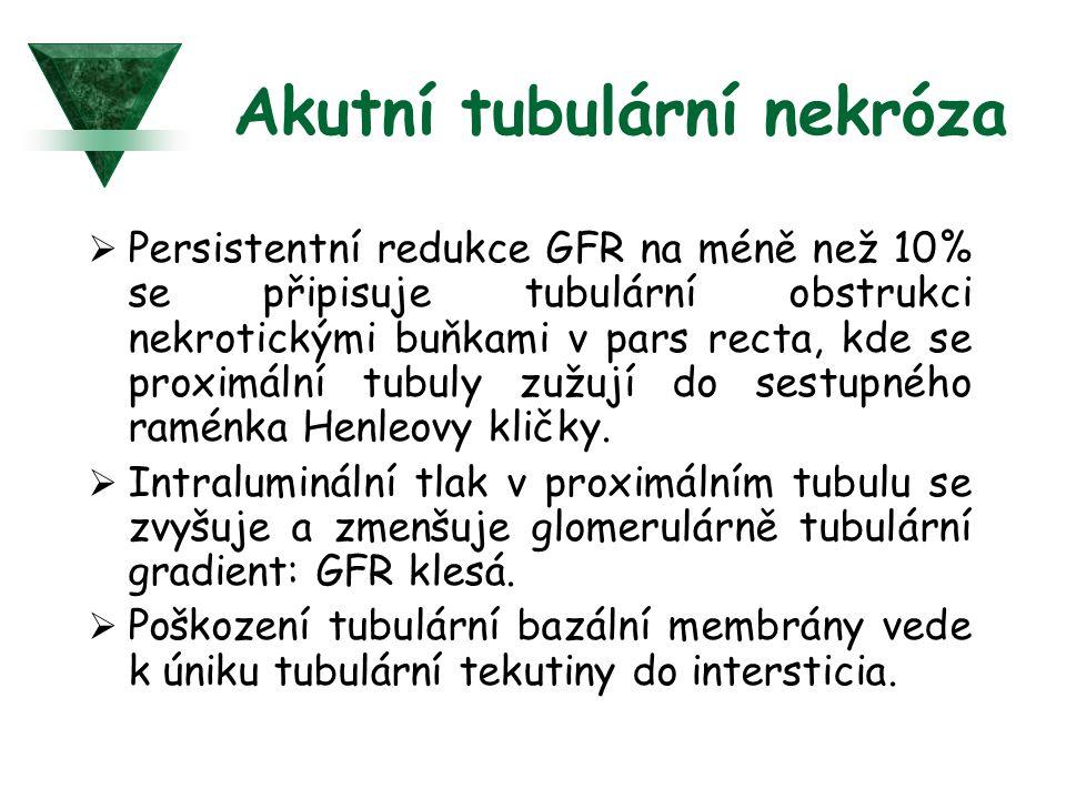 Akutní tubulární nekróza  Persistentní redukce GFR na méně než 10% se připisuje tubulární obstrukci nekrotickými buňkami v pars recta, kde se proximá