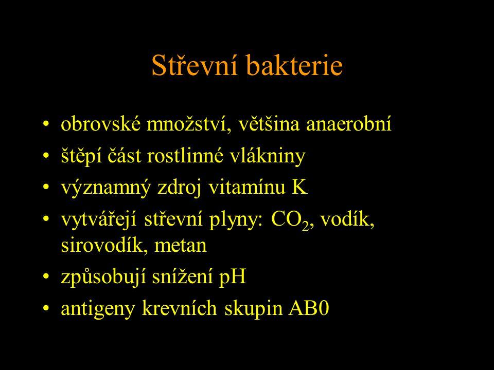 Střevní bakterie obrovské množství, většina anaerobní štěpí část rostlinné vlákniny významný zdroj vitamínu K vytvářejí střevní plyny: CO 2, vodík, sirovodík, metan způsobují snížení pH antigeny krevních skupin AB0