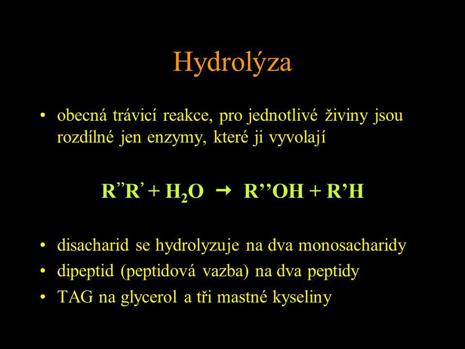 Hydrolýza obecná trávicí reakce, pro jednotlivé živiny jsou rozdílné jen enzymy, které ji vyvolají R '' R ' + H 2 O  R''OH + R'H disacharid se hydrolyzuje na dva monosacharidy dipeptid (peptidová vazba) na dva peptidy TAG na glycerol a tři mastné kyseliny