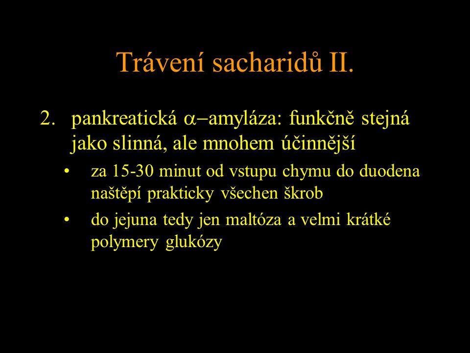 Trávení sacharidů II.