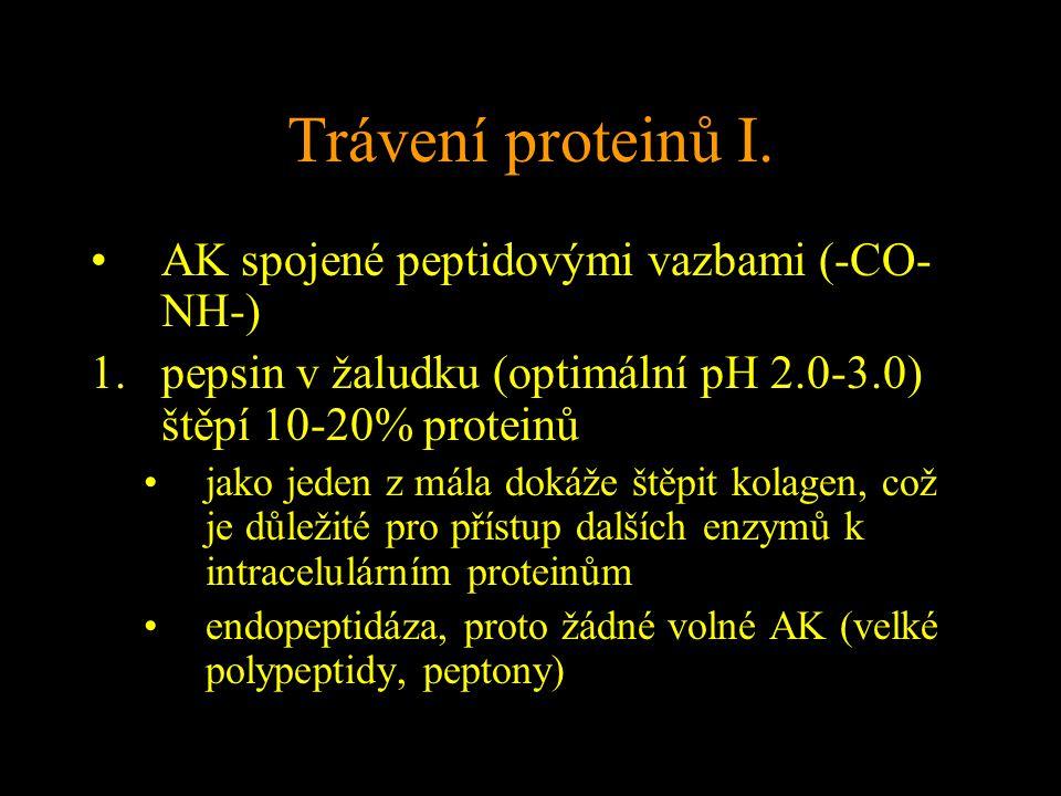 Trávení proteinů I.