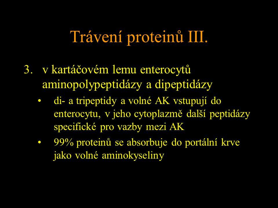 Trávení proteinů III.