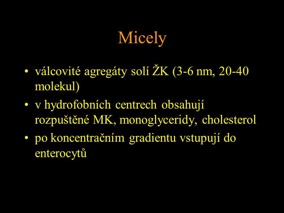 Micely válcovité agregáty solí ŽK (3-6 nm, 20-40 molekul) v hydrofobních centrech obsahují rozpuštěné MK, monoglyceridy, cholesterol po koncentračním gradientu vstupují do enterocytů