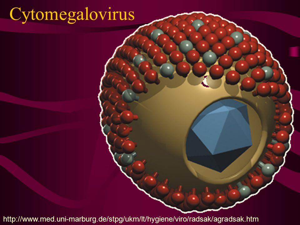 Cytomegalovirus http://www.med.uni-marburg.de/stpg/ukm/lt/hygiene/viro/radsak/agradsak.htm