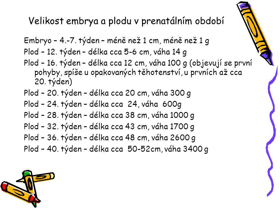Velikost embrya a plodu v prenatálním období Embryo – 4.-7.