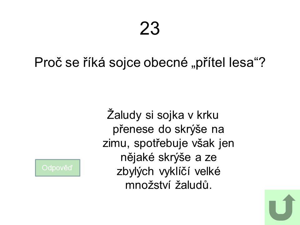 """23 Proč se říká sojce obecné """"přítel lesa""""? Odpověď Žaludy si sojka v krku přenese do skrýše na zimu, spotřebuje však jen nějaké skrýše a ze zbylých v"""