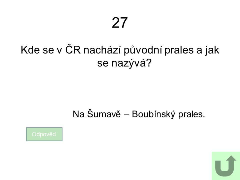 27 Kde se v ČR nachází původní prales a jak se nazývá? Odpověď Na Šumavě – Boubínský prales.