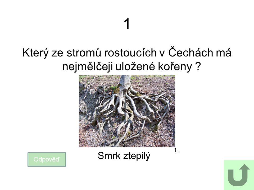 1 Který ze stromů rostoucích v Čechách má nejmělčeji uložené kořeny ? Odpověď Smrk ztepilý 1.