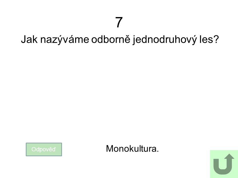 7 Jak nazýváme odborně jednodruhový les? Odpověď Monokultura.