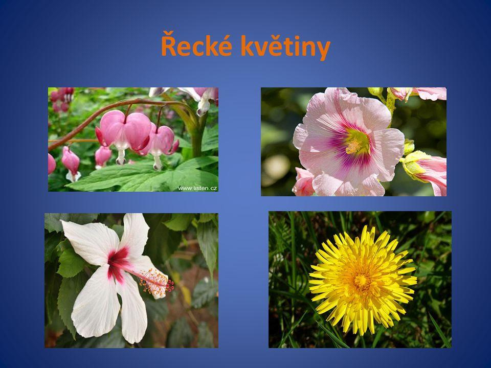 Řecké květiny