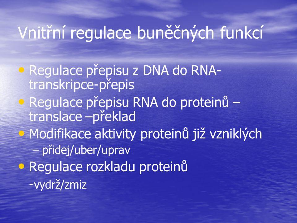 Vnitřní regulace buněčných funkcí Regulace přepisu z DNA do RNA- transkripce-přepis Regulace přepisu RNA do proteinů – translace –překlad Modifikace a