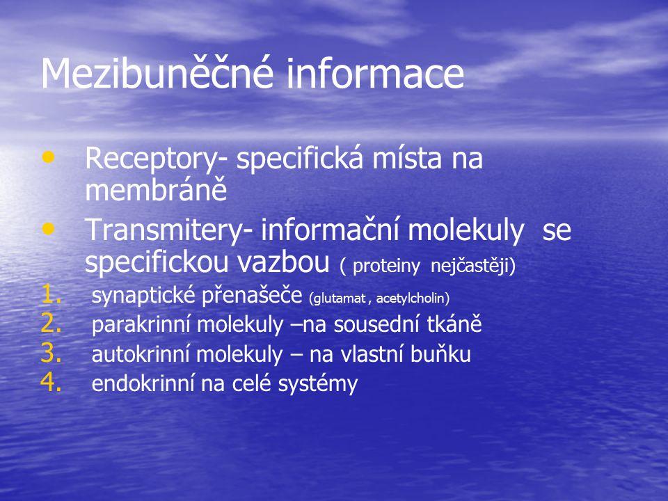 Mezibuněčné informace Receptory- specifická místa na membráně Transmitery- informační molekuly se specifickou vazbou ( proteiny nejčastěji) 1. 1. syna