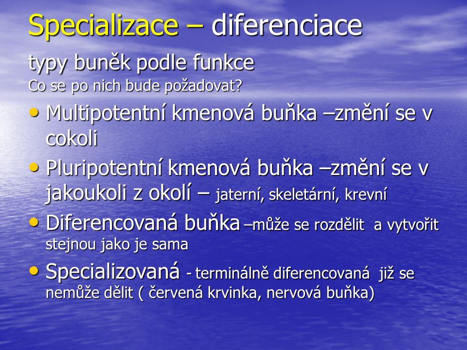 Specializace – diferenciace typy buněk podle funkce Co se po nich bude požadovat? Multipotentní kmenová buňka –změní se v cokoli Multipotentní kmenová