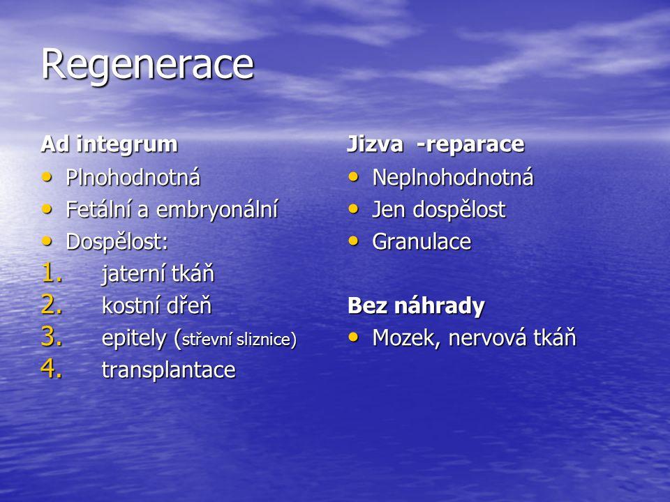 Regenerace Ad integrum Plnohodnotná Plnohodnotná Fetální a embryonální Fetální a embryonální Dospělost: Dospělost: 1. jaterní tkáň 2. kostní dřeň 3. e