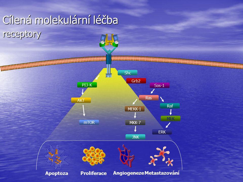 Proliferace Metastazování Angiogeneze Apoptoza Shc PI3-K Raf MEKK-1 MEK MKK-7 JNK ERK Ras mTOR Grb2 AKT Sos-1 Cílená molekulární léčba receptory
