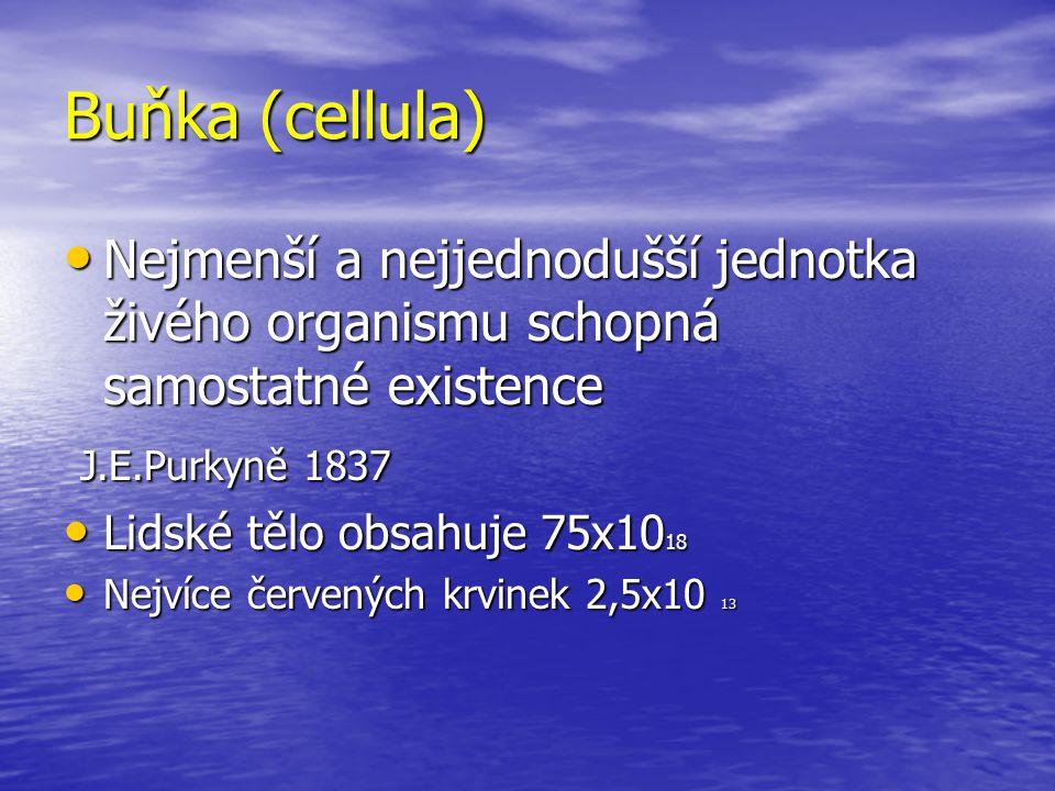 Buňka (cellula) Nejmenší a nejjednodušší jednotka živého organismu schopná samostatné existence Nejmenší a nejjednodušší jednotka živého organismu sch