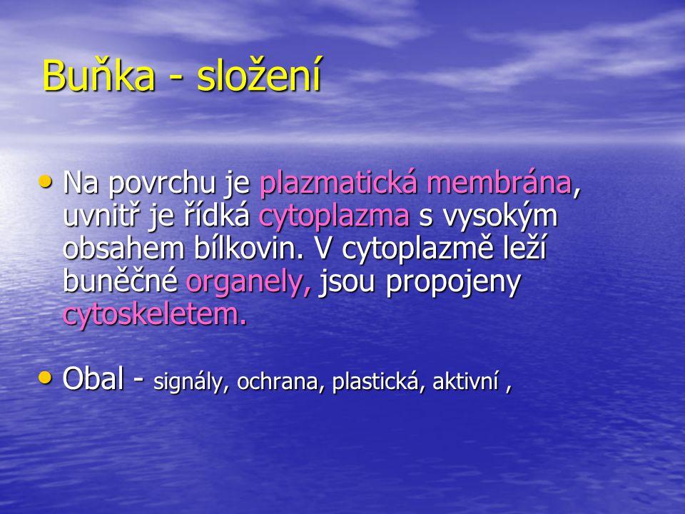 Tkáň - soubor stejnotvarých buněk s jednou hlavní funkcí Epitel - kryje volný povrch těla a vystýlá jeho dutiny Epitel - kryje volný povrch těla a vystýlá jeho dutiny Pojivo : vazivo, chrupavka, kost- regenerace,jizva Pojivo : vazivo, chrupavka, kost- regenerace,jizva Sval : hladká a příčně pruhovaná Sval : hladká a příčně pruhovaná Nerv Nerv Tekutiny : lymfa,krev,moč,slzy,sliny Tekutiny : lymfa,krev,moč,slzy,sliny
