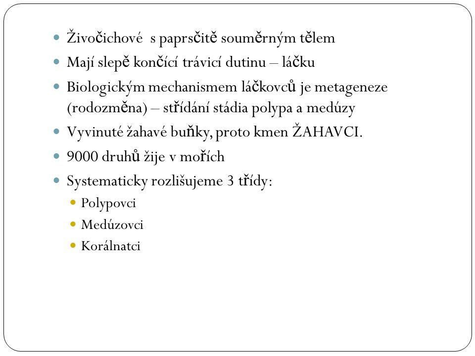 Společné znaky žahavců P ř ítomnost žahavých bun ě k (knidoblasty) = ektodermální p ů vod hruškovitý tvar Nemohou se regenerovat –dopln ě ní ze vmeze ř ených bun ě k ektodermu = embryonální charakter Uvnit ř se nachází dutinka se sto č eným žahavým vláknem (=jed hypnotoxin) Nejv ě tší z nich mají citlivý výb ě žek (knidocil) Žahavci mají dva t ě lní typy: Polyp (p ř isedlá forma) Medúza (plovoucí forma)