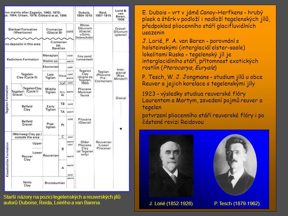 přelom 19. a 20. stol. - neznalost podloží s výjimkou již. Limburku (těžba karbonského uhlí) E. Dubois - darwinista, první zájem o tegelenské vrstvy,