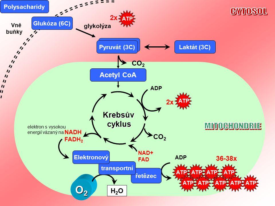 Detekce glukózy (nad 5,5mmol/l) buňkami pankreatu SACHARIDY v POTRAVĚ EXTRACELULÁRNÍ TRÁVENÍ SACHARIDŮ GLUKÓZA V KRVI INTRACELULÁRNÍ ŠTĚPENÍ SACHARIDŮ Stimulace buněk k příjmu glukózy (prostřednictvím Inzulinových receptorů INZULIN sekrece  buňkami pankreatu