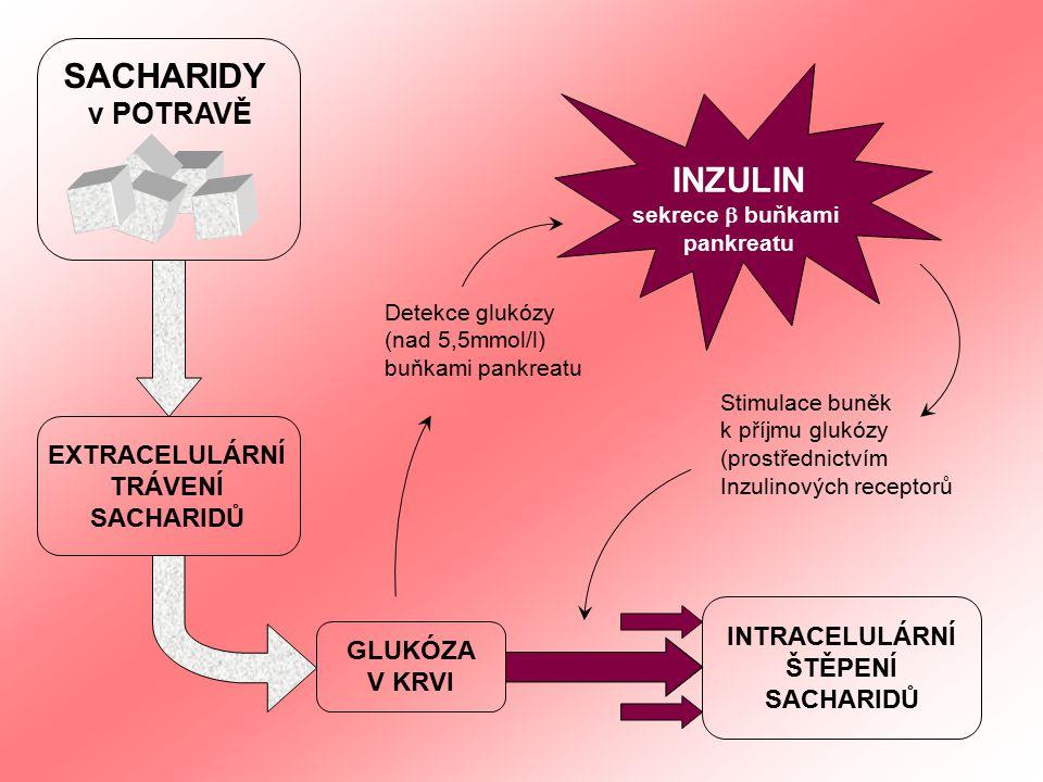 Detekce glukózy (nad 5,5mmol/l) buňkami pankreatu SACHARIDY v POTRAVĚ EXTRACELULÁRNÍ TRÁVENÍ SACHARIDŮ GLUKÓZA V KRVI INTRACELULÁRNÍ ŠTĚPENÍ SACHARIDŮ