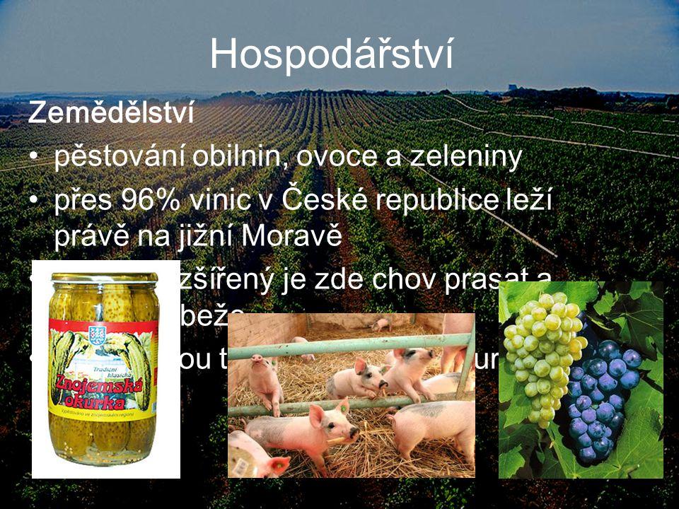 Hospodářství Zemědělství pěstování obilnin, ovoce a zeleniny přes 96% vinic v České republice leží právě na jižní Moravě Hodně rozšířený je zde chov p